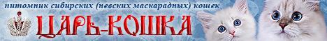 """Питомник сибирских (невских маскарадных) кошек """"Царь-кошка"""""""