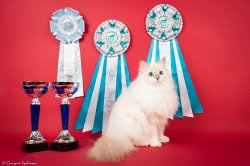 Аксинья Царь-Кошка, 11 мес.