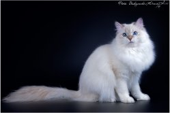Аксинья Царь-Кошка, 1 год и 2 месяца
