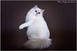 Аксинья Царь-Кошка, 9 мес.