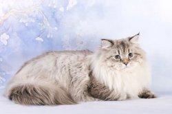 Жан Царь-Кошка