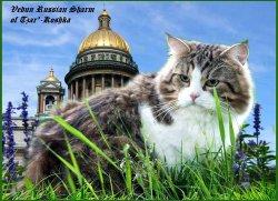Ведун Русский Шарм