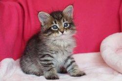 Яшка-Цыган Царь-Кошка