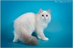 Аглая Царь-Кошка, 5 мес.