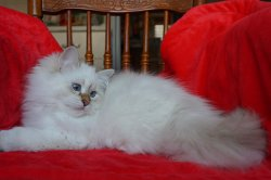 Кира, 4 месяца