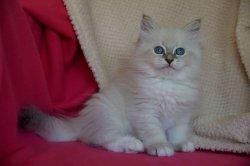 Октябренок Царь-Кошка
