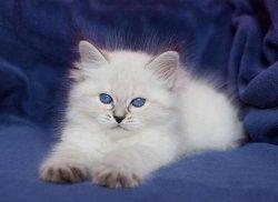 Уля Царь-Кошка, 7 недель