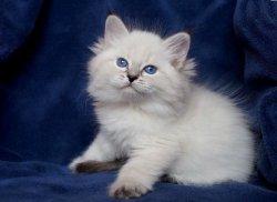 Уля Царь-Кошка