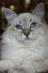 Фрея Царь-Кошка