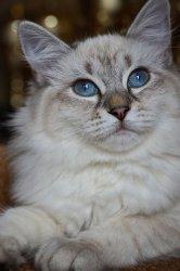 Фрея, 5 месяцев