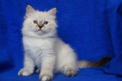 Элен Царь-Кошка