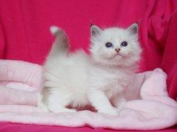 Юлай Царь-Кошка