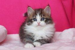 Якоб Царь-Кошка