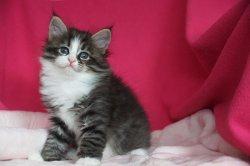 Янкель Царь-Кошка