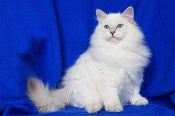 Пончу 4 месяца, вес 3,5 кг)))