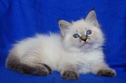 Эмиль Царь-Кошка (Малыш)