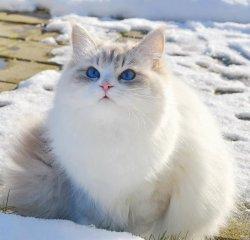 Акулина Царь-Кошка, 10 мес.