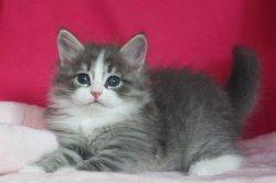 Львеночку 1,5 месяца
