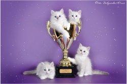 Наши котята
