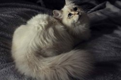 Ива, 7 месяцев
