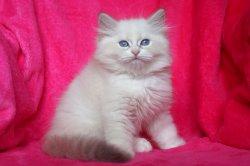 Братец Июль Царь-Кошка