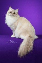 Божена-Василина Царь-Кошка, 1 год