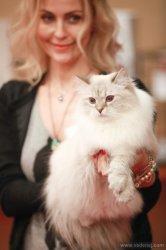 Выставка кошек в Ростове-на-Дону, 5-6 апреля, 2014