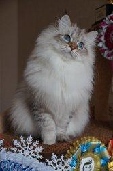 Леночка Царь-Кошка