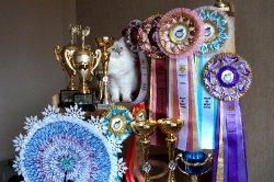 Трофеи выставки в Армавире и все-все-все.
